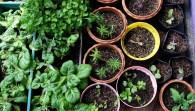 7 dicas para o sucesso na hora de semear