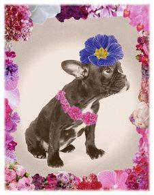 Flower Power Dog Rosa