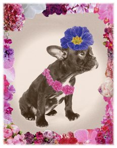 Flower Power Dog Rosa