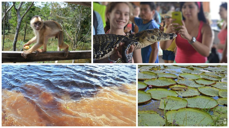 Passeio de 1 dia em Manaus - mosaico