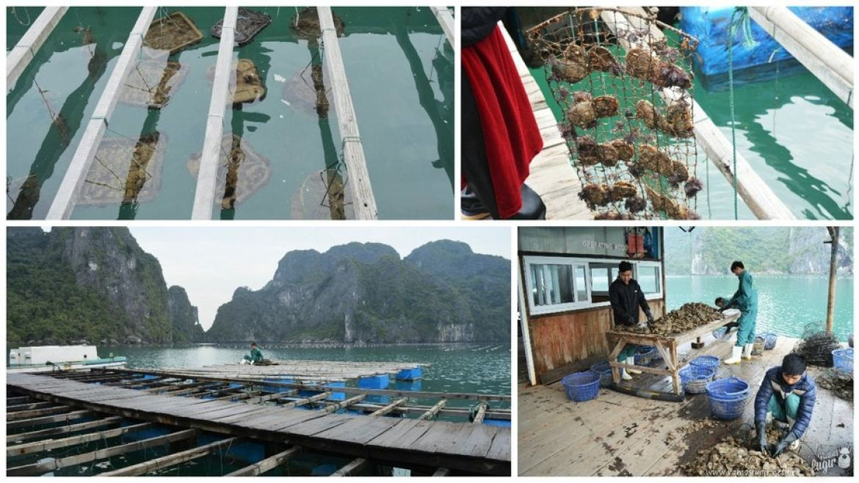 criação de pérolas em halong Bay