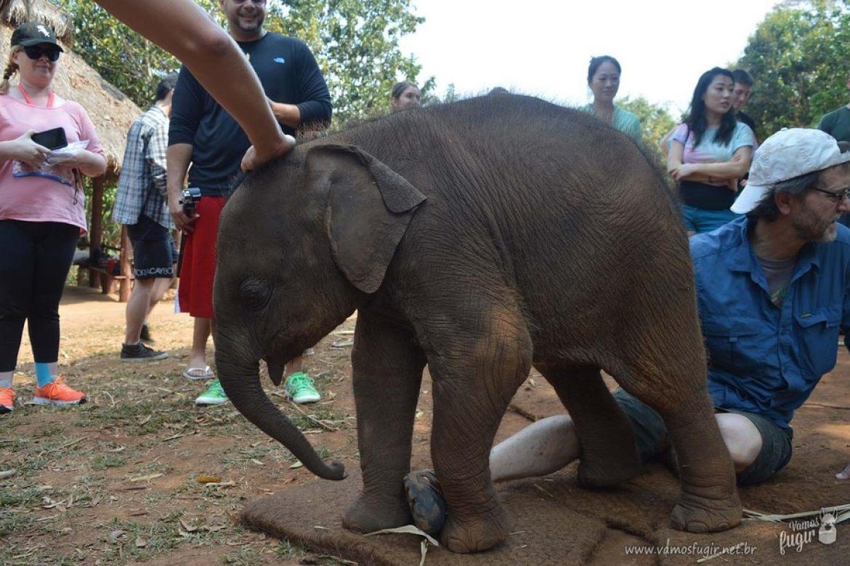elefantes-em-chiang-mai-patara-elephant-park-2