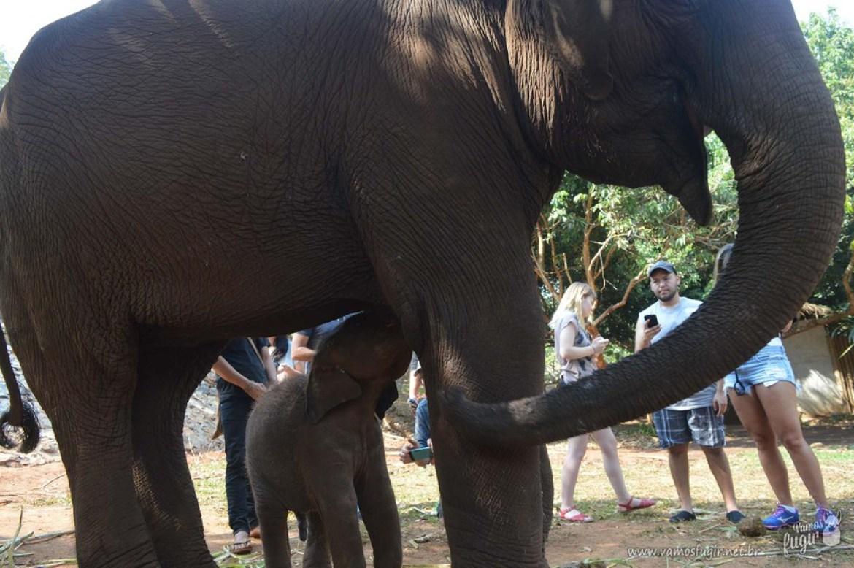 elefantes-em-chiang-mai-patara-elephant-park-3