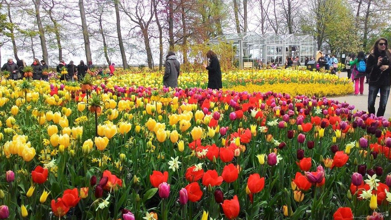 campos de tulipas da Holanda