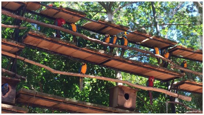 Parque das Aves de Foz do Iguaçu