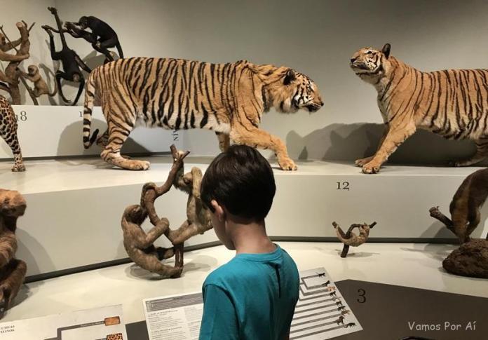 Museu de Zoologia USP