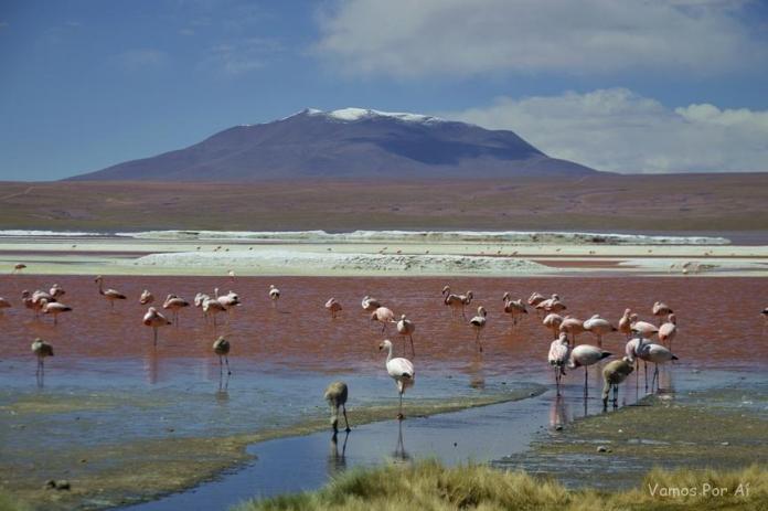 Laguna Colorada na Bolivia