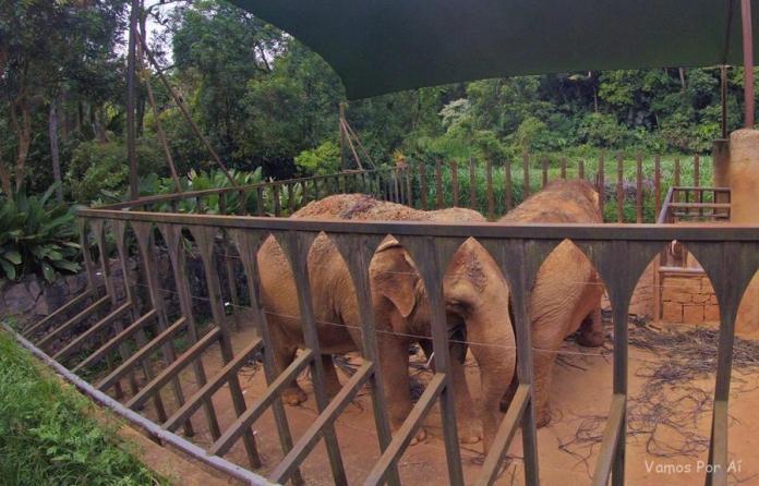 Zoológico de São Paulo- Elefantes