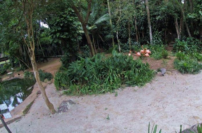 Zoológico de São Paulo: o Maior Zoológico do Brasil