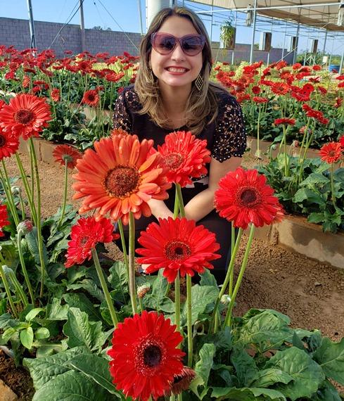 plantações de flores de holambra, fazenda de flores, pode ir nas fazendas de flores de holambra
