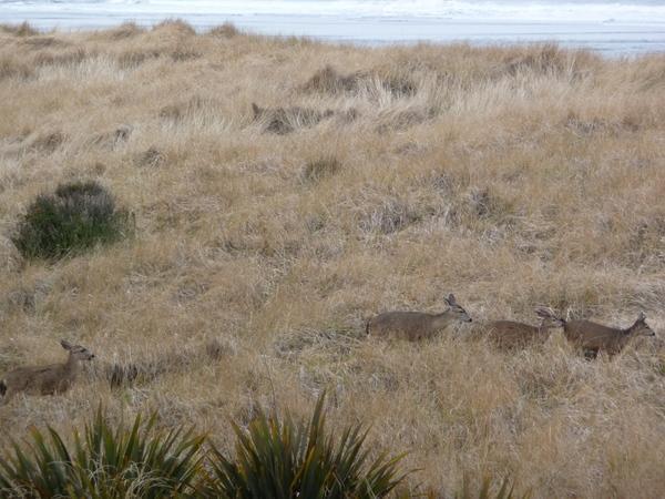 与鹿为邻、听涛看海