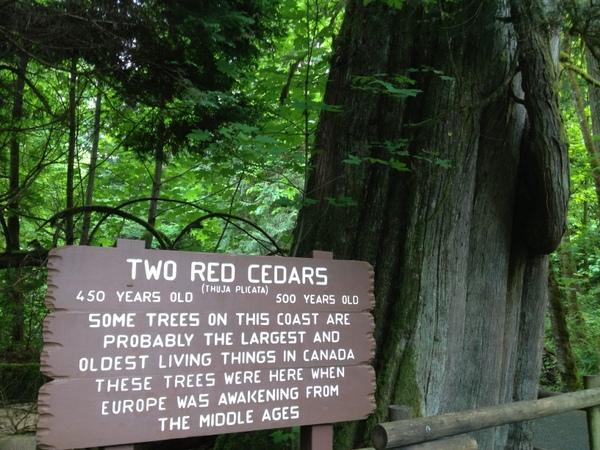 四五百年的红杉