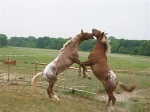 Don't fight over the small stuff! www.VanAlstyneHomes.com