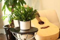 Crispy Wave Plant - the natural air purifier - Van Belle ...