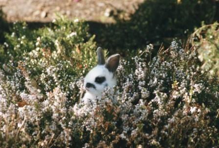 Killing the campus rabbits  debunking the disinformation