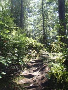 A forest trail on north Twin Island