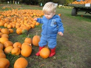 what to do in vancouver pumpkin patch