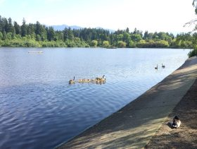 stanley park lost lagoon