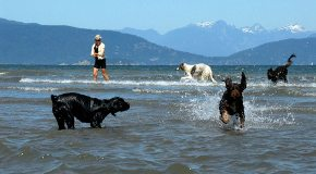 DP-Spanish-banks-Frances-and-dogs
