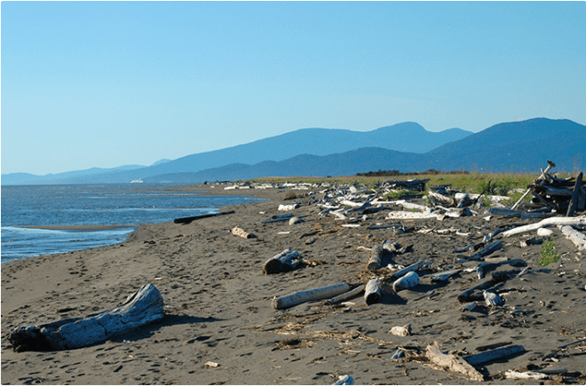 Best Ocean Beaches Outside Vancouver: Iona Beach