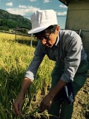 Taakaki Yamauchi showing us the unique characteristics of Watari Bune rice