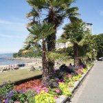 English Bay Palm Trees