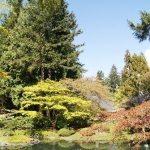 UBC's Nitobe Garden in April