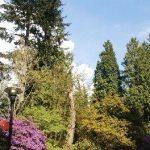 UBC Botanical Garden Trail