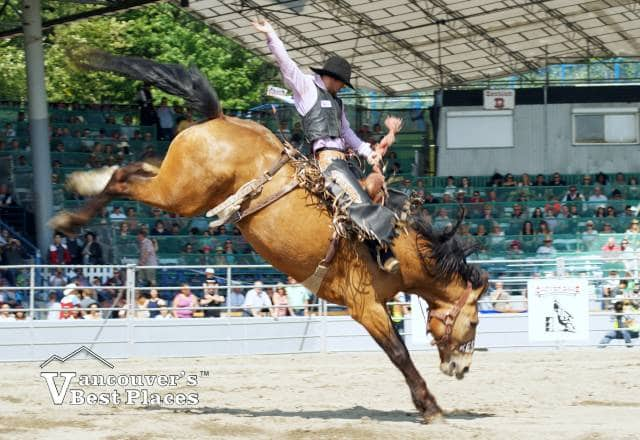 Cloverdale Rodeo Bronco Ride