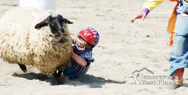 Cloverdale Rodeo Mutton Busting