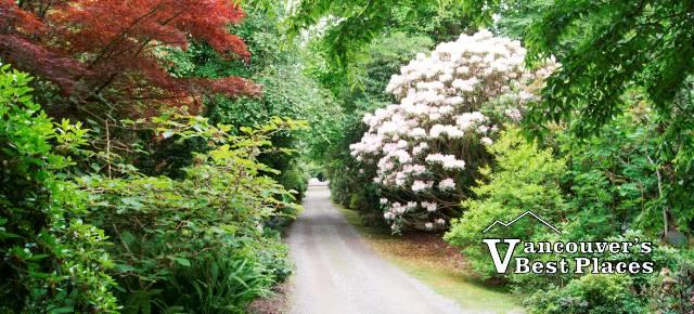 Gravel Roadway at Darts Hill Garden
