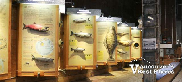 Men fishing display at Gulf of Georgia Cannery historic site