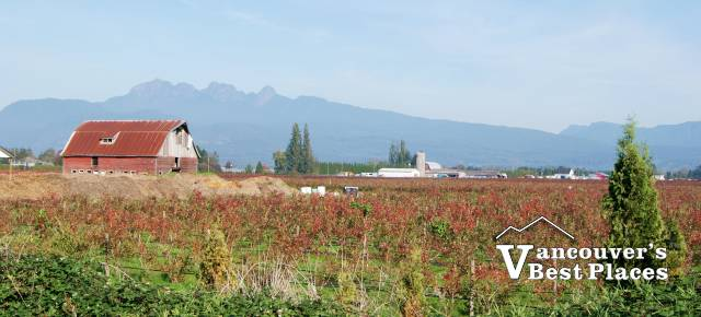 Pitt Meadows Blueberry Farm