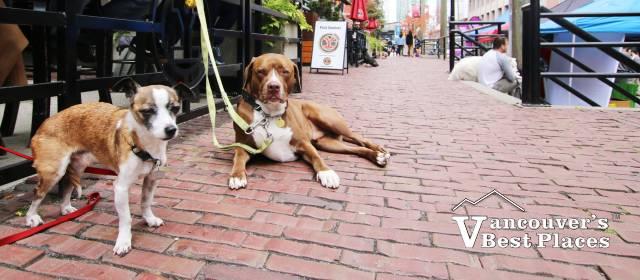 Pet-A-Palooza Dogs in Yaletown