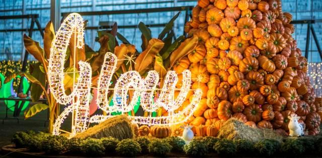 Glow Harvest