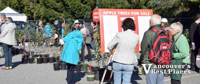 Apple Festival Trees for Sale