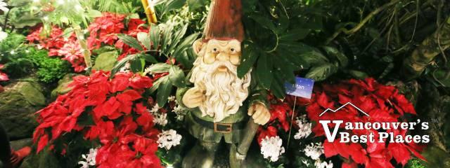 Bloedel Christmas Gnome