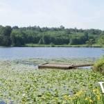 Deer Lake Lily Pads