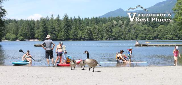 People and Geese at Alice Lake