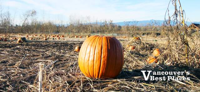 Eagle Acres Pumpkin Patch Pumpkin