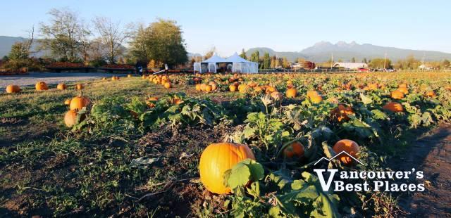 Laity Farm Pumpkin Patch