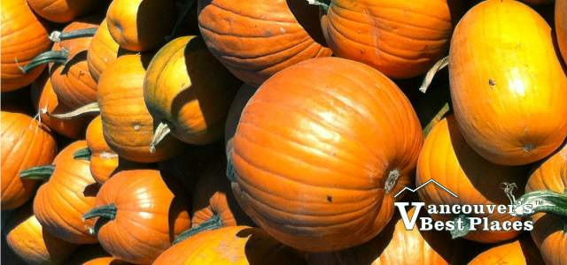 Vancouver Pumpkins