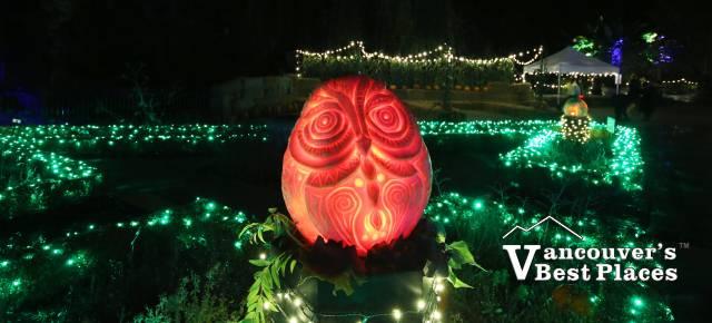 VanDusen Owl Jack-o-'Lantern