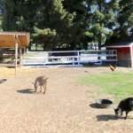 Farm Animals at Richmond Country Farms