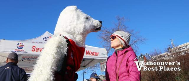 Polar Bear in White Rock