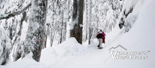 Mt. Seymour Snowshoe Winter Wonderland