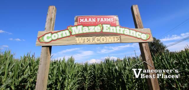 Maan Farms Corn Maze
