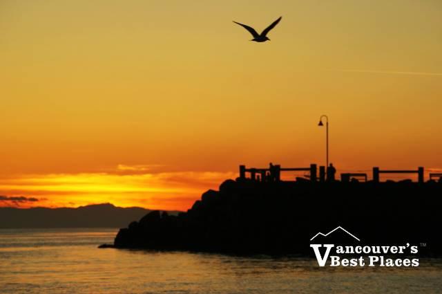 Seagull Sunset at Dundarave
