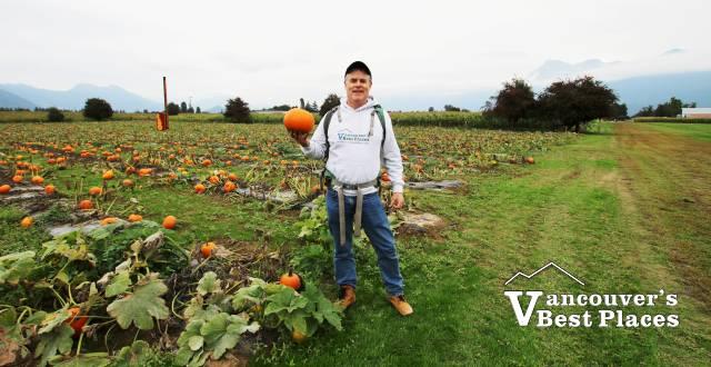 Pumpkin Field at Petey's