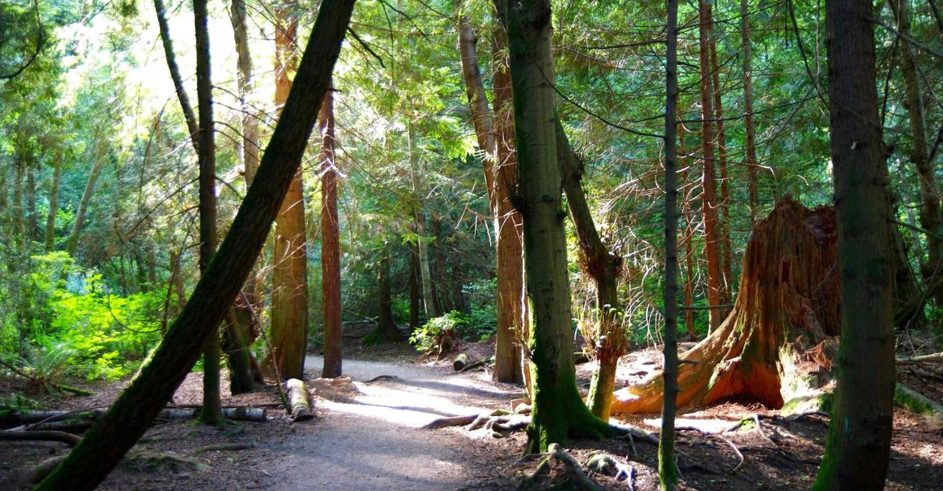 Forest Bathing in Pacific Spirit Park